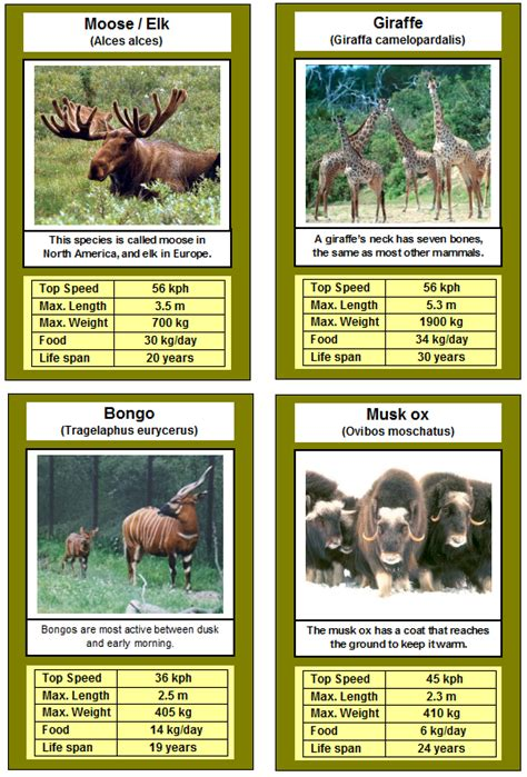 printable animal top trump cards best photos of printable animal cards animal sorting