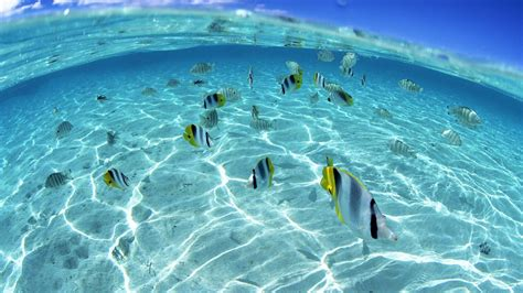 3d wallpaper water fish underwater fish wallpaper photos 2846 wallpaper