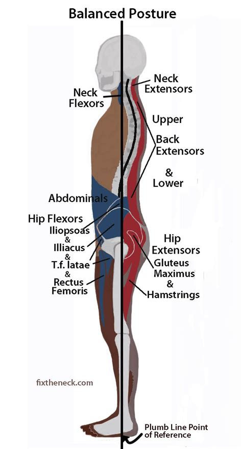 tattoo pain muscle 33 best get your posture right images on pinterest back