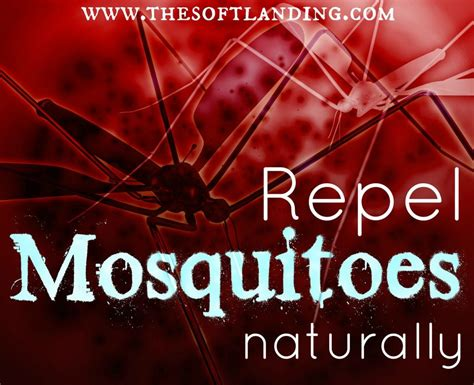 how to repel mosquitoes naturally the soft landing 174