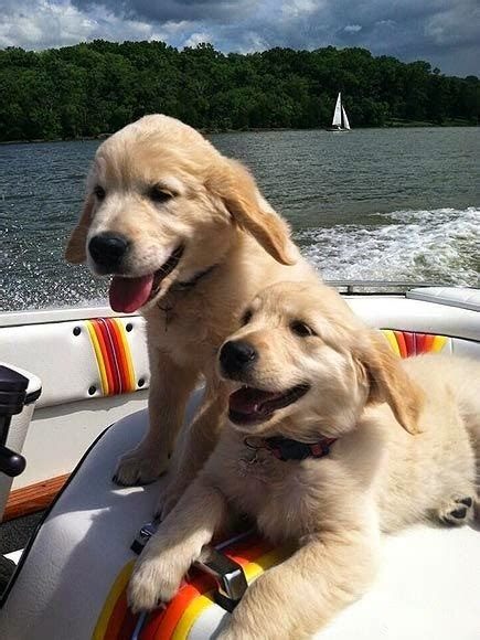 dog on boat quotes cute puppy and dog so now the twins are so comfy on boats