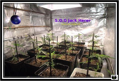 cultivo de marihuana en interior paso a paso 2 d 237 a quot d quot hora quot 0 quot paso a floraci 243 n el cultivo de marihuana