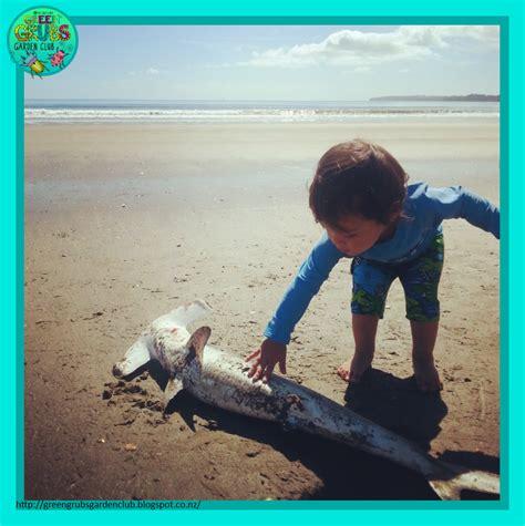 baby shark non stop green grubs garden club this week in nature a