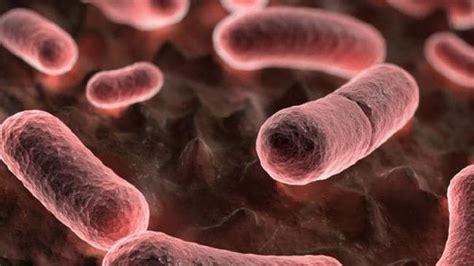 black death black death scientists uncover deadly disease has been