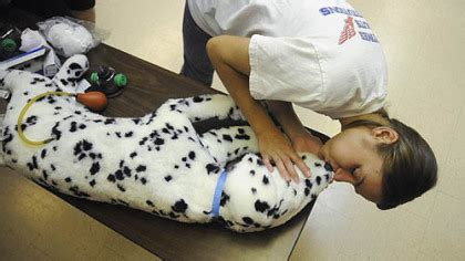 puppy cpr could you save your pet s learn how pittsburgh post gazette