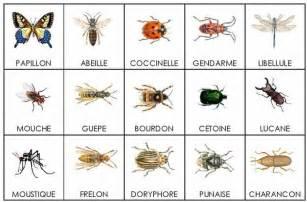 insectes vocabulaire vocabolario pinterest need to