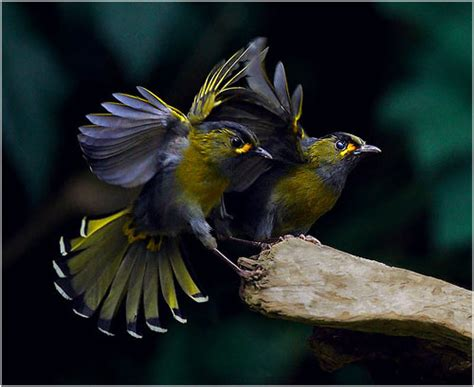 imagenes increibles y maravillosas maravillosas fotograf 237 as de aves im 225 genes taringa