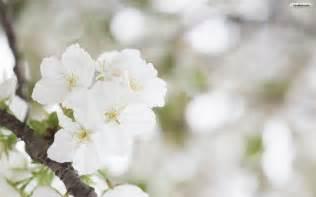 White Flower Images by Deanne Morrison White Flower Background