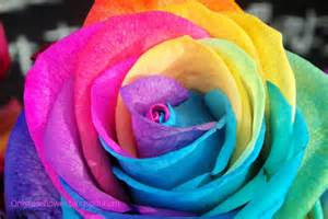 multi color roses awesome multicolor only beautiful roses