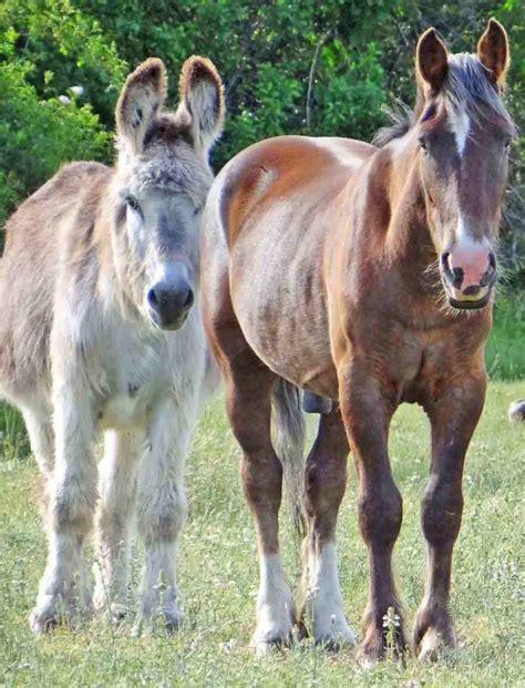 imagenes graciosos de burros caballos y burros