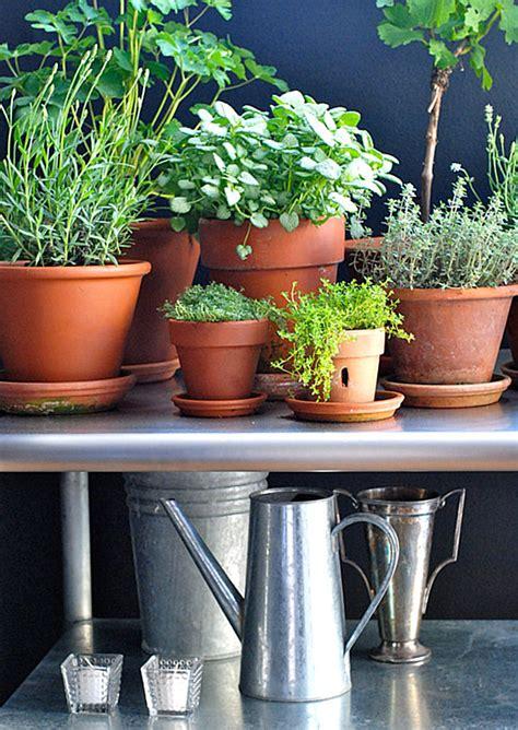 Indoor Plants Sunny Window Choosing The Best Indoor Plants For Your Interior