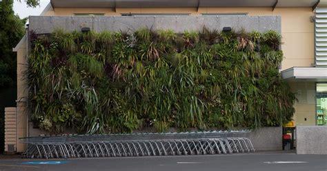 vertical garden nz plants on walls vertical garden