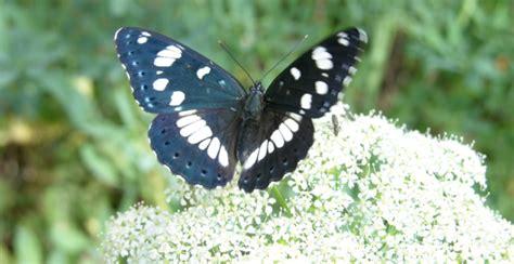 insetti volanti insetti volanti la loro diminuzione 232 tragica per gli