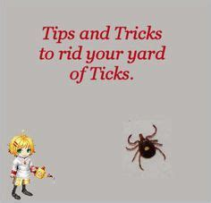 how to rid your backyard of mosquitoes 1000 images about bugs on pinterest ants mosquitoes