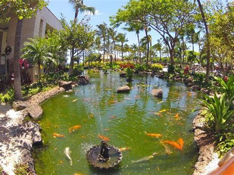 coy pond picture of marriott ko olina beach club