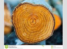 Closeup Rings Of Chopped Tree Trunk Stock Photo - Image ... Firewood Prices