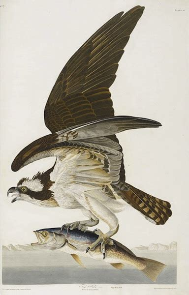 list of 20 most expensive birds birds of america the world s most expensive book amusing planet