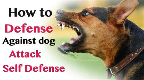 how to dogs to attack how to defend against attack self defence