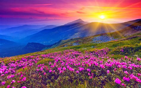 study of flower colours in the garden bk study point brahmakumaries daily positive thoughts