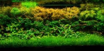 Aga Aquascaping Aquarium Driftwood Car Interior Design
