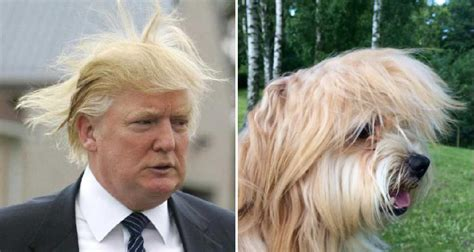donald trump looks like president donald trump these dogs don t know and don t care