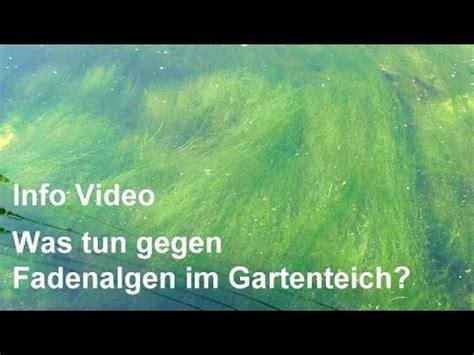 Aquarium Algen Entfernen Hausmittel by Algen Im Teich Bek 228 Mpfen Algenbek 228 Mpfung Funnycat Tv