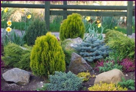 conifere nane da giardino sempreverdi da terrazzo piante da terrazzo