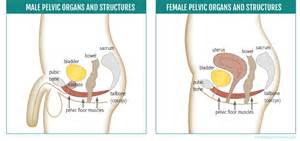 for pelvic floor strength yogauonline