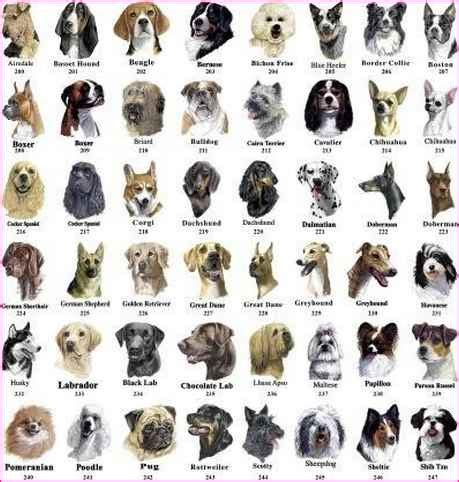 breed identification quiz identify breed by picture quiz simple image gallery