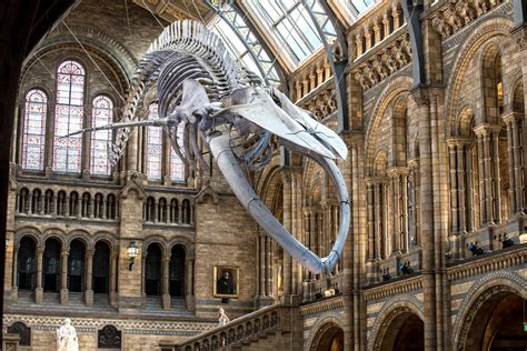 blue guide museums and 1905131003 natural history museum unveils dippy the dinosaur s replacement london evening standard