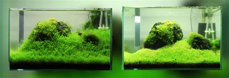 Aquascape ᐅ Bodendecker Im Aquarium Top Pflanzen F 252 R Rasen Im Aquarium