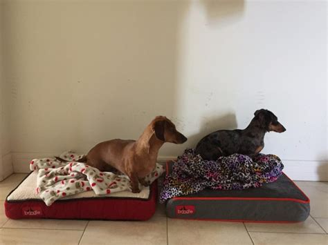 no chew dog bed dog bed cot type buying no chew dog beds factors you