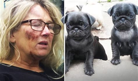 pug owners pedigree pug puppy missing after thugs brutally attacked owner at home uk news