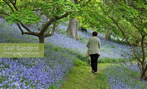visitor pattern walk tree gap gardens visitor walking through woodland garden with