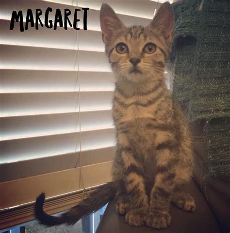 meow house cat rescue meow house cat rescue 28 images meow house cat rescue available cats for adoption