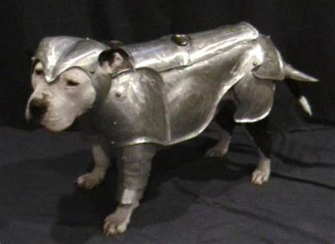 armour dogs armor for dogs how about squirrels as well dipnoid