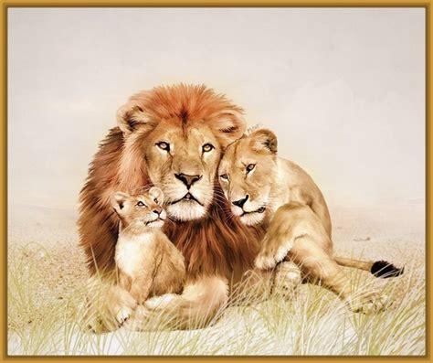 imagenes de leones felises imagenes de leones en familia y felices imagenes de leones