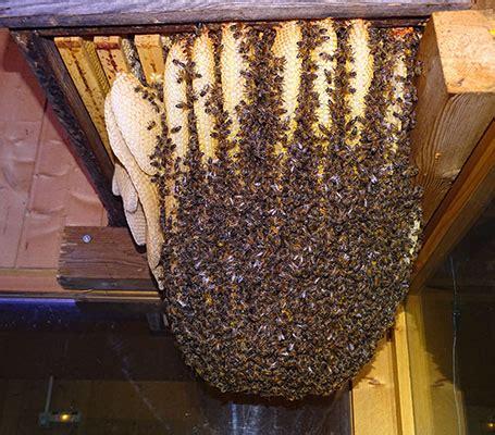 la grange aux abeilles estivareilles visites guid 233 es la grange aux abeilles