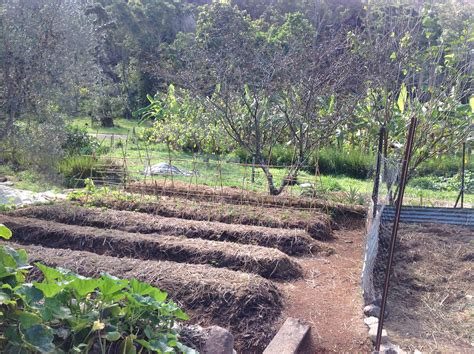 backyard permaculture australia new garden beds with food forest behind at pri sunshine