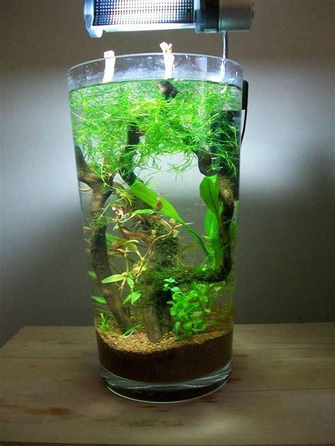 Vase Aquarium by 17 Best Images About Fish On Cichlids Fish