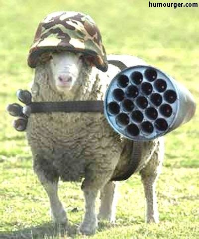 sheep no more the of awareness and attack survival books humour mouton photo d humour brebis image comique