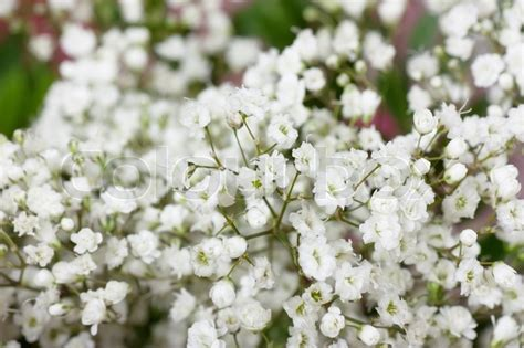 background with small white flowers stock photo colourbox