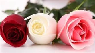 Beautiful Roses HD Desktop Wallpapers in 1080p ~ Super HD