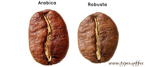 robusta coffee type robusta coffee brands and beans