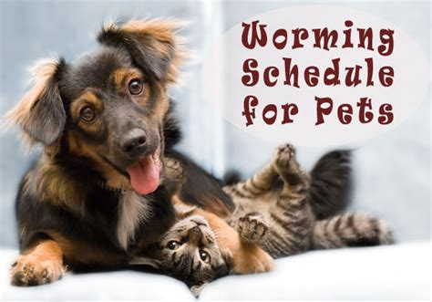 puppies and worming schedule a length guide to worming schedule for dogs and cats