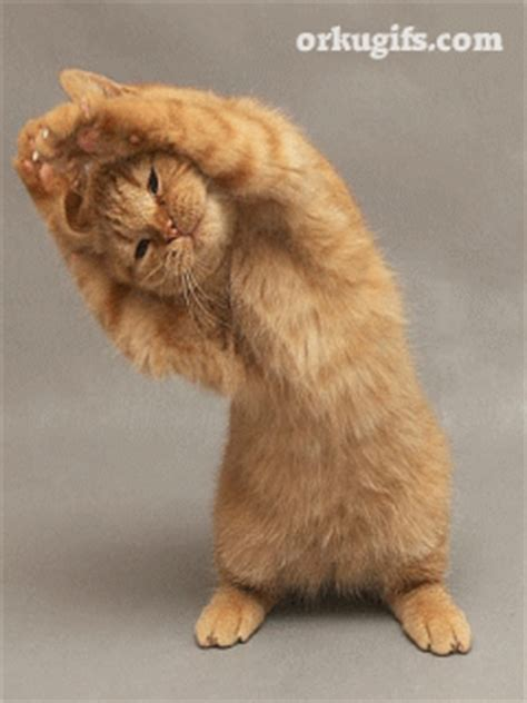 kitten stretching images  messages