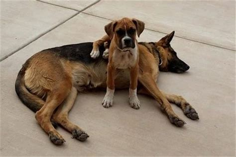 dogs sitting   dogs   cutest  youll   day  pics