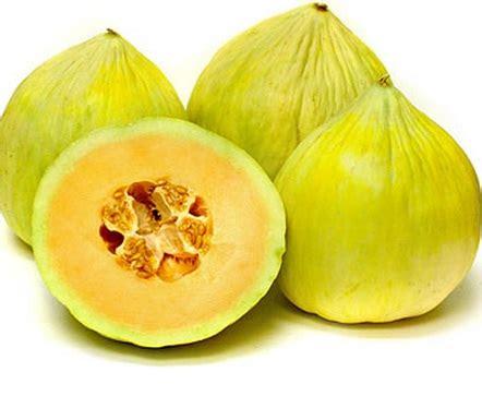 Benih Melon Madesta F1 benih melon pepaya melon crenshaw jual tanaman hias