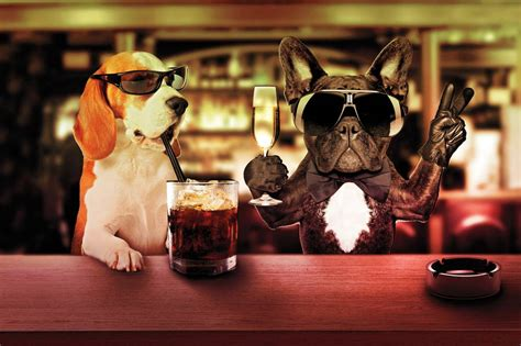top dog bar man s best drinking buddy nevada could consider a bill