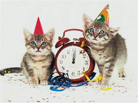new year cats wallpaper animals wallpaper better